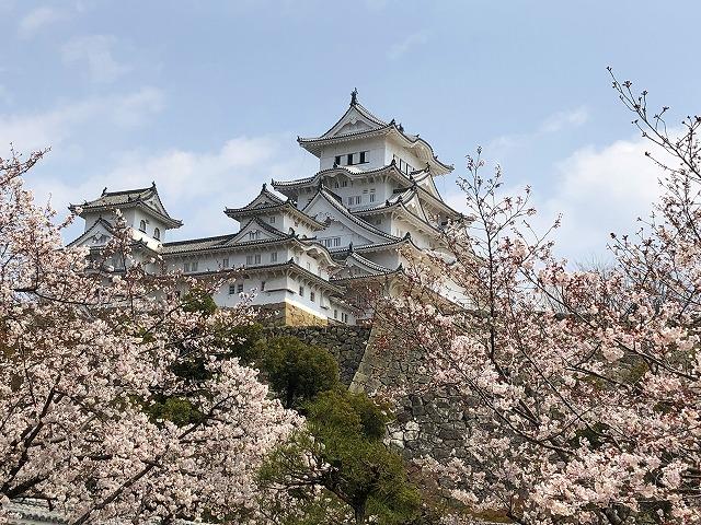 姫路城でお花見!